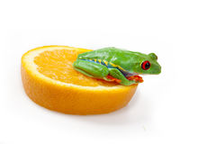 Orange frog Royalty Free Stock Photography