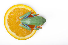 Orange frog Royalty Free Stock Images