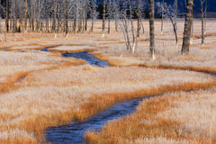 Orange Frosted Grass and Stream, Yellowstone Stock Images