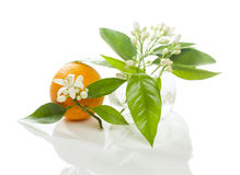 Orange und Blüte Stockfotos
