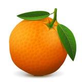 Orange Fruchtabschluß oben Stockbilder