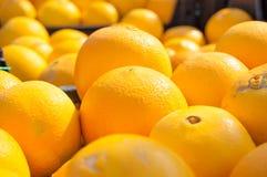 Orange fruiitbakgrund white för tangerine för citrus grupp för citrus ny orange Marknadsställe Royaltyfri Bild