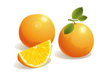 Orange Fruit. Realistic vector illustration of an orange and a slice of orange fruit
