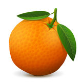 Orange fruit close up Stock Images