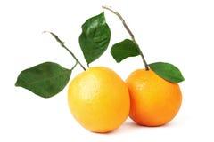 Orange fruit couple. Stock Image
