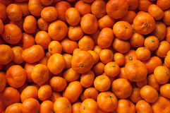 Orange. The orange fruit for eat Stock Images