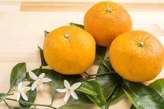 Orange fruit and flowers Royalty Free Stock Photo