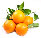 Orange fruit isolated Stock Photo