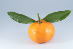 Orange. Fruit isolated on white background Royalty Free Stock Photo
