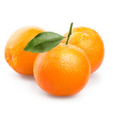 Orange fruit isolated on white background Royalty Free Stock Photos