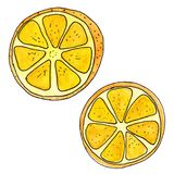 Orange fruit painted on a white background with black outline, half and slice. vector illustration