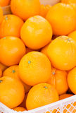 Orange Fruit. Royalty Free Stock Images