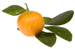Orange fruit. sweet calamondin. Orange fruit - calamondin on white Royalty Free Stock Photos