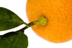 Orange fruit. sweet detail. Orange fruit - calamondin on white Royalty Free Stock Images