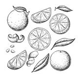 Orange fruit vector drawing set. Summer food engraved illustration. Isolated hand drawn slice, whole and half orange, peel , leaves. Botanical sketch of citrus stock illustration