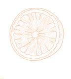 Orange fruit - vector illustration. Stock Image