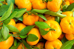 Orange fruits Royalty Free Stock Photos