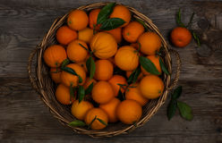 Orange fruits in a  basket Royalty Free Stock Photo