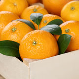 Orange fruits in a box with copyspace Royalty Free Stock Images