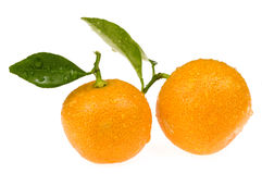 Orange fruits. calamondis Stock Images