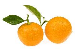 Orange fruits. calamondis. Sweet orange fruit on the white Stock Images