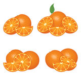 Orange fruits compositions stock illustration