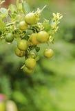 Orange fruits decoration Stock Photos