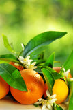 Orange fruits and flowers. Royalty Free Stock Photo