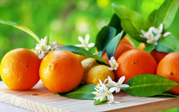 Orange fruits and flowers Stock Photos