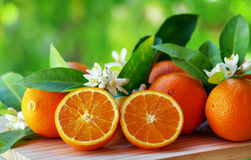 Orange fruits and flowers Stock Image