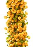 Orange fruits flying. Orange fruits and leafs flying Stock Photos