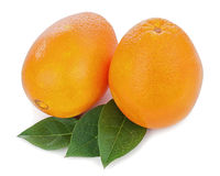 Orange fruits with green leaves isolated on white background. Royalty Free Stock Photo
