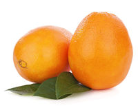 Orange fruits with green leaves isolated on white background. Royalty Free Stock Photography