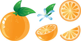 Orange fruits icon set. Isolated in a white background. Without transparency Royalty Free Stock Image