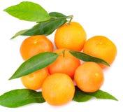 Orange fruits with leaf on white background Royalty Free Stock Photography