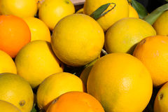 Orange fruits Stock Image