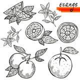 Orange fruits set Royalty Free Stock Photo