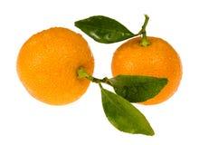 Orange fruits. sweet calamondins. Orange fruits - calamondins on white Stock Photography
