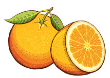 Orange fruits.Vector Royalty Free Stock Photography