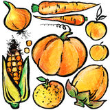 Orange  fruits and vegetables. Watercolor hand drawn fruits and vegetables. Stock Photos