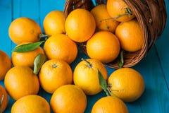 Orange frukt Royaltyfri Foto