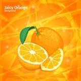 Orange frukt för vektor på saftig orange bakgrund Sammansättning av tropiska frukter av citrusa apelsiner Design av den mogna ape Royaltyfri Fotografi