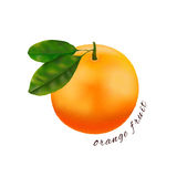 Orange frukt isolerad illustration eps10 Texturerad citrus Arkivbild