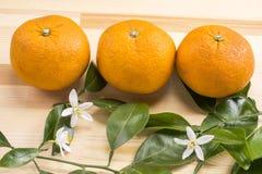 Orange frukt och blommor royaltyfri foto
