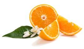 Orange frukt och orange blomma Arkivbild