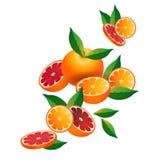 Orange frukt på vit bakgrund, den sunda livsstilen eller bantar begreppet, logoen för nya frukter stock illustrationer