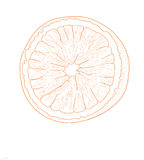 Orange frukt - vektorillustration Fotografering för Bildbyråer