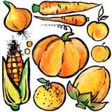 Orange frukter och grönsaker Drog frukter och grönsaker för vattenfärg hand Arkivfoton