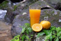 Orange fruktsaft i en glass och ny frukt på en sten med ormbunkebladet Arkivbilder