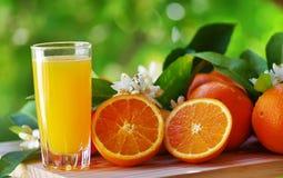 Orange fruktsaft i exponeringsglas, blomning och skiva av apelsinen Royaltyfri Foto